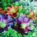 Plant of the Season – Succulents