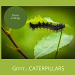 Grrrrr Caterpillars!