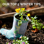 Top 5 Winter Tips
